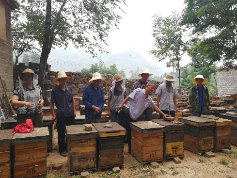 嘉兴赶集网:陈喜林:修养蜂 助脱贫