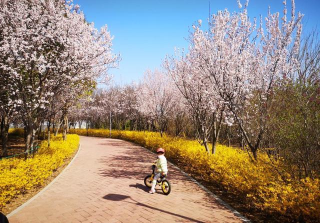 """今年还没去公园赏花?进来看,咱这儿有""""屏保级""""美景"""
