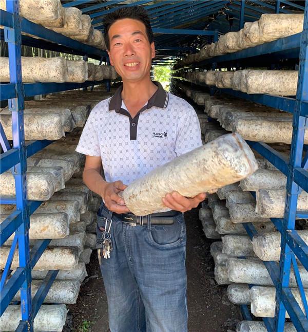 南阳西峡县:土地里生金 香菇种植助力五朵山村高质量脱贫