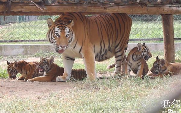 来动物园过国庆吧!一大波宝藏新宠等你见,还有免费游园等优惠