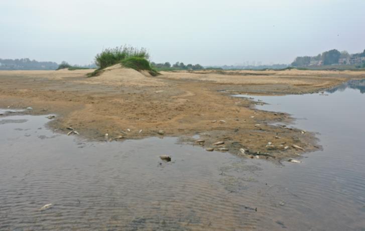 固始縣史河出現大面積死魚,該縣水利局無回應
