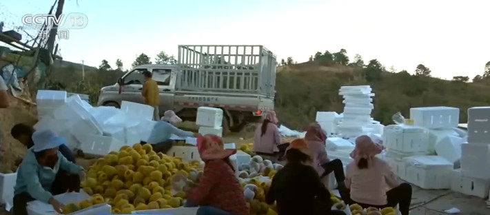 """农业农村部:全国""""菜篮子""""产品价格总体稳定"""
