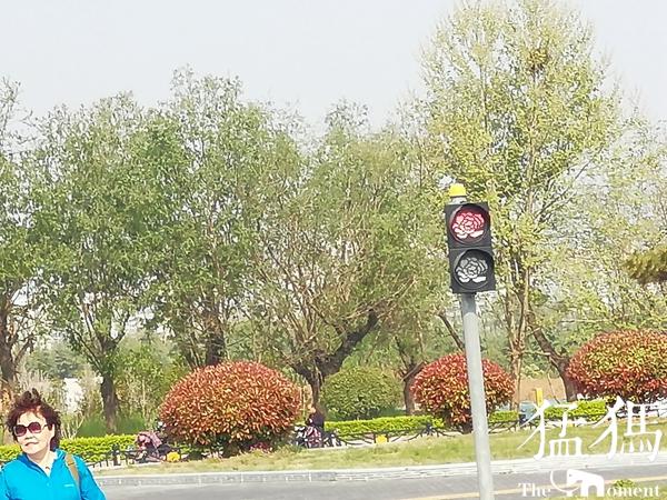 """惊喜!""""红牡丹停,绿牡丹行"""" 洛阳部分红绿灯变漂亮""""牡丹花"""""""