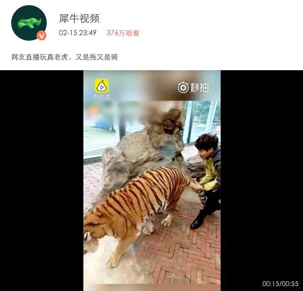 大的野生猫科动物