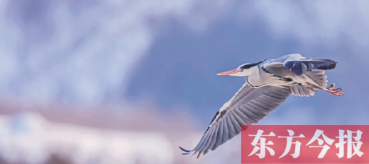 中国首部全景声自然电影《鹭世界》热映